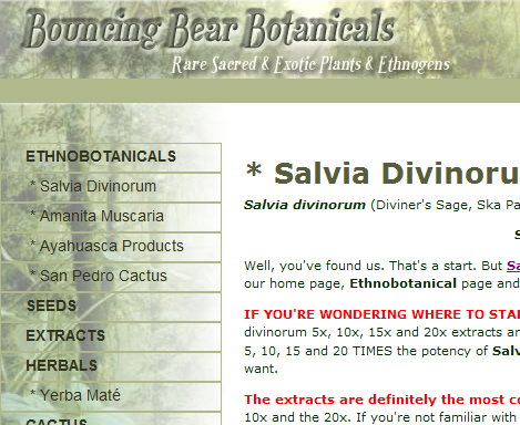 Salvia Divinorum Bouncing Bear Botanicals
