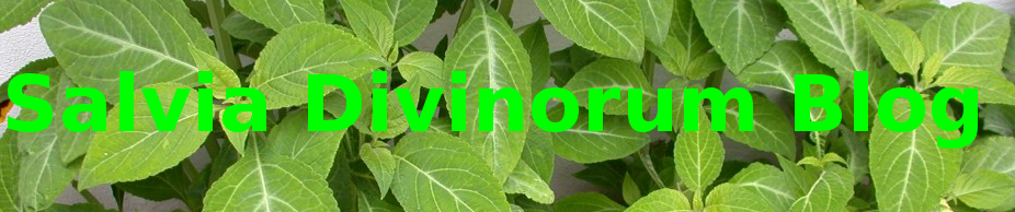 Salvia Divinorum Blog