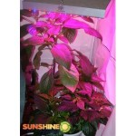 90 Watt High Power Full Spectrum LED Grow Light RED & B, 2506MX